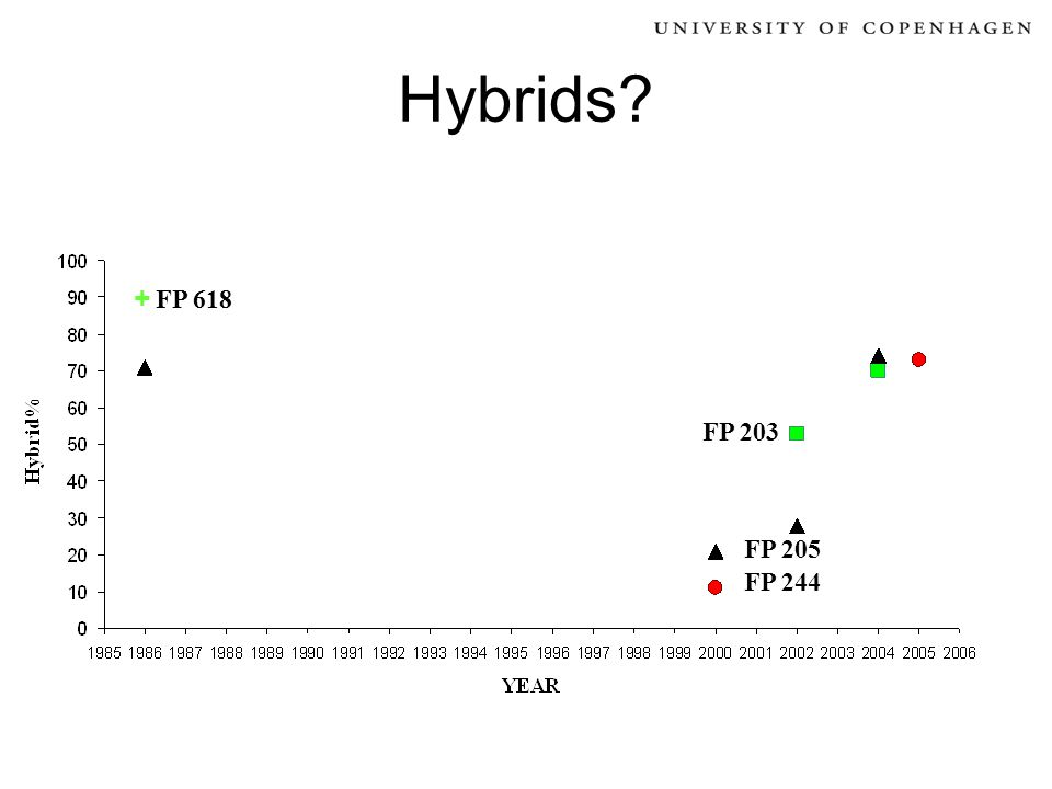 Hybrids? FP 244 FP 205 FP 203 + FP 618