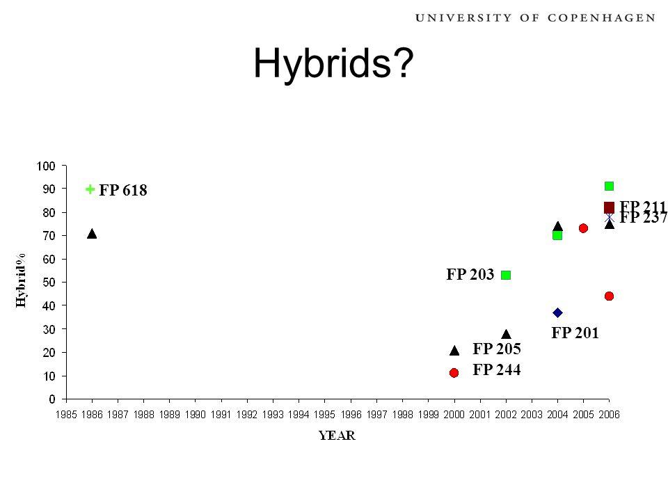 Hybrids? FP 244 FP 205 FP 203 FP 201 FP 211 FP 237 + FP 618