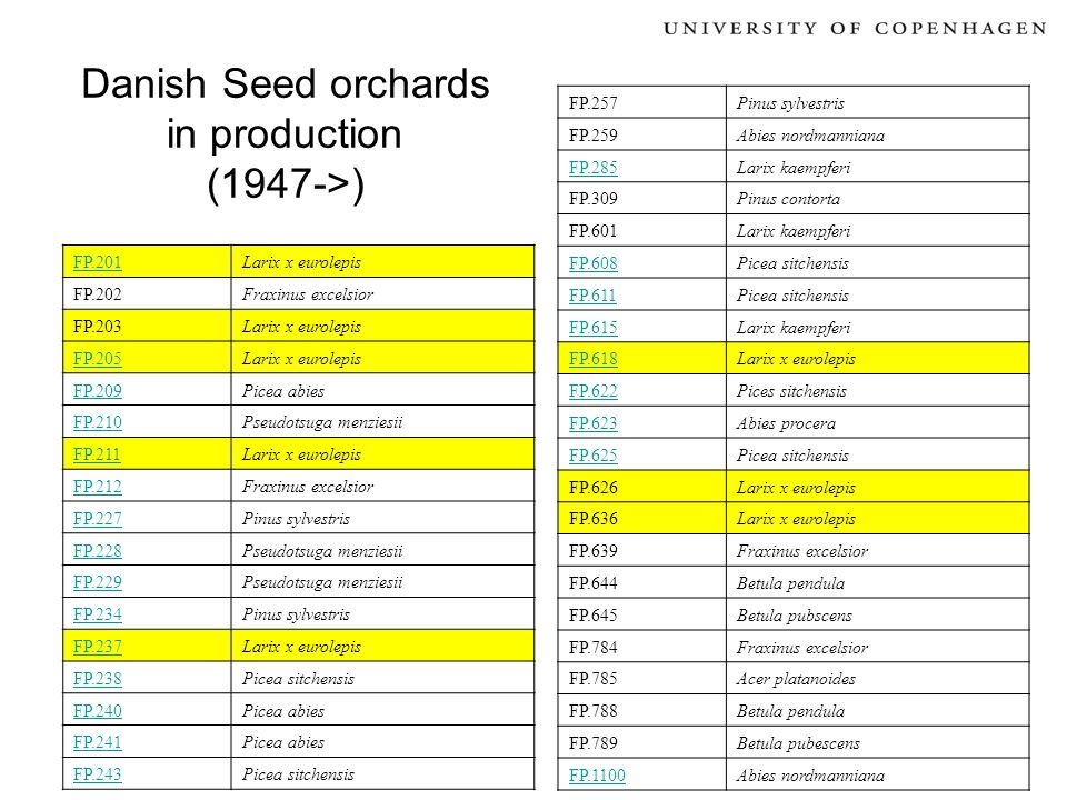 Danish Seed orchards in production (1947->) FP.201Larix x eurolepis FP.202Fraxinus excelsior FP.203Larix x eurolepis FP.205Larix x eurolepis FP.209Pic