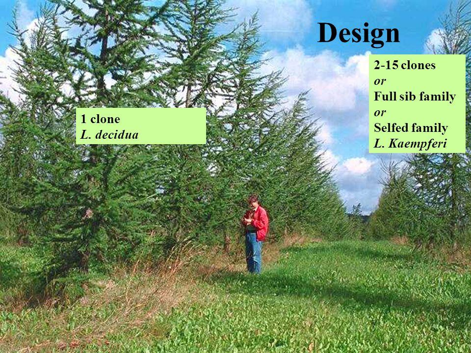 Design 1 clone L. decidua 2-15 clones or Full sib family or Selfed family L. Kaempferi