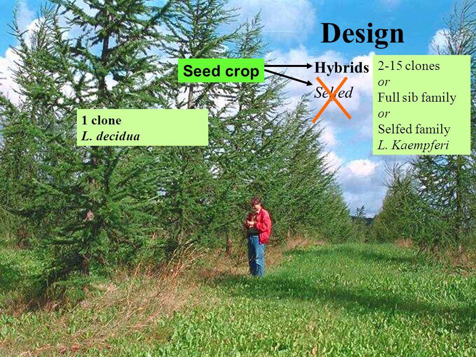 Design 1 clone L. decidua 2-15 clones or Full sib family or Selfed family L. Kaempferi Seed crop Hybrids Selfed