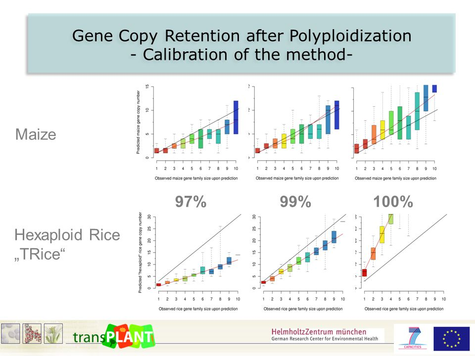 "Gene Copy Retention after Polyploidization - Calibration of the method- Gene Copy Retention after Polyploidization - Calibration of the method- 97%99%100% Maize Hexaploid Rice ""TRice"