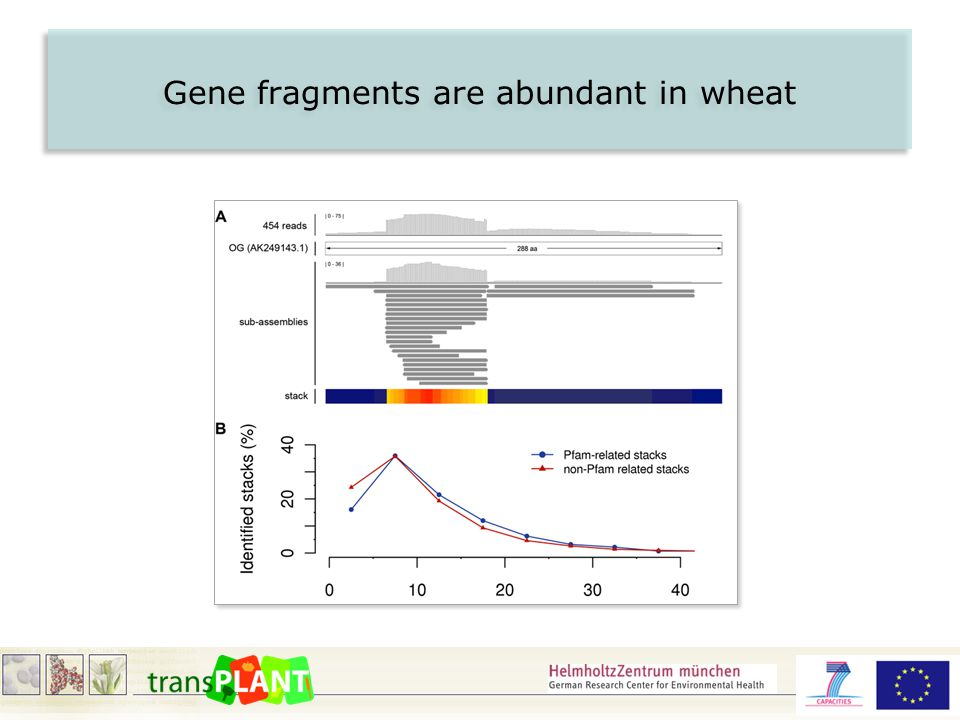 Gene fragments are abundant in wheat
