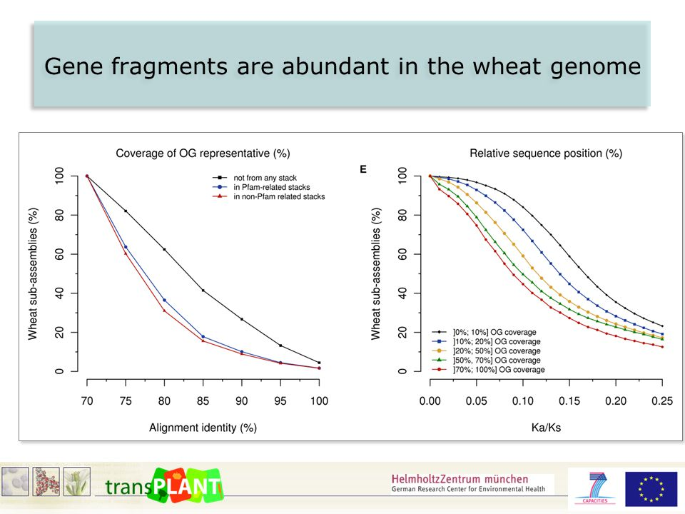 Gene fragments are abundant in the wheat genome