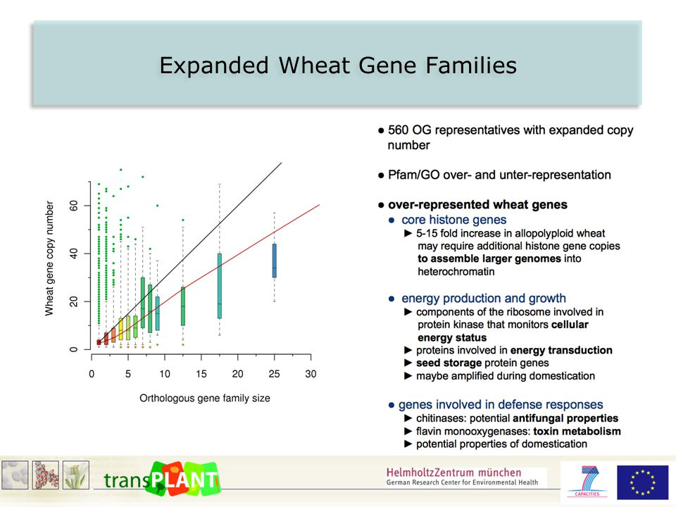 Expanded Wheat Gene Families