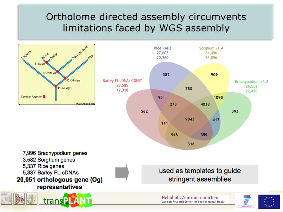 Ortholome directed assembly circumvents limitations faced by WGS assembly