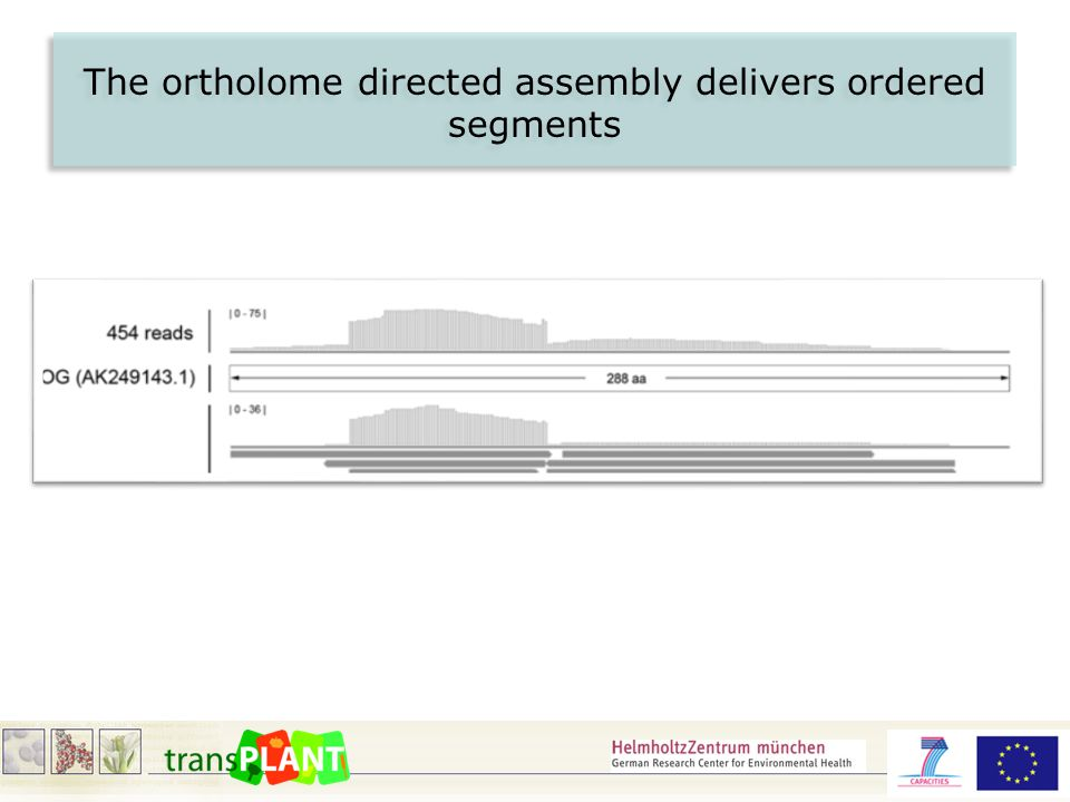 The ortholome directed assembly delivers ordered segments
