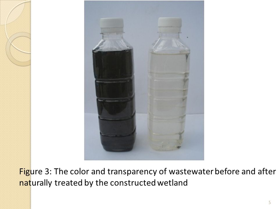 5 Figure 3: The color and transparency of wastewater before and after naturally treated by the constructed wetland