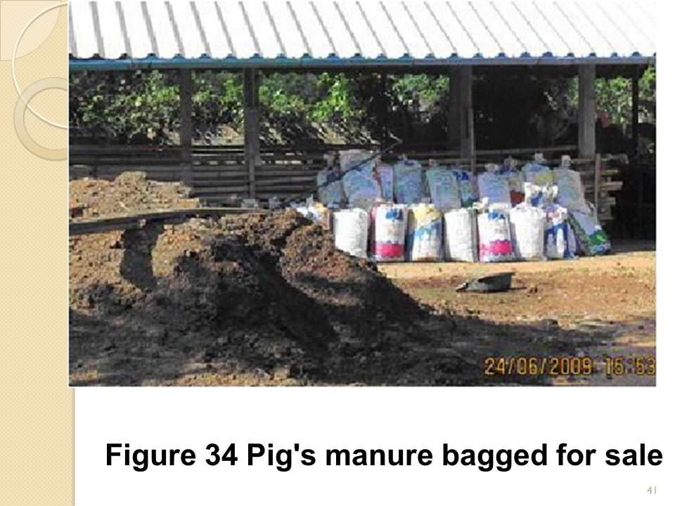 41 Figure 34 Pig s manure bagged for sale