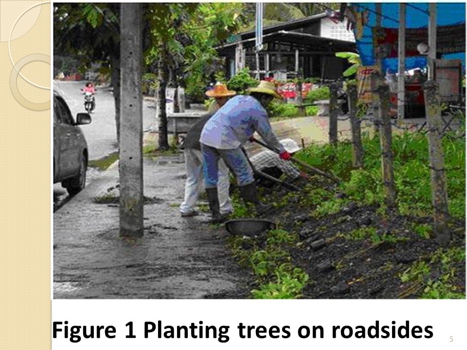 5 Figure 1 Planting trees on roadsides