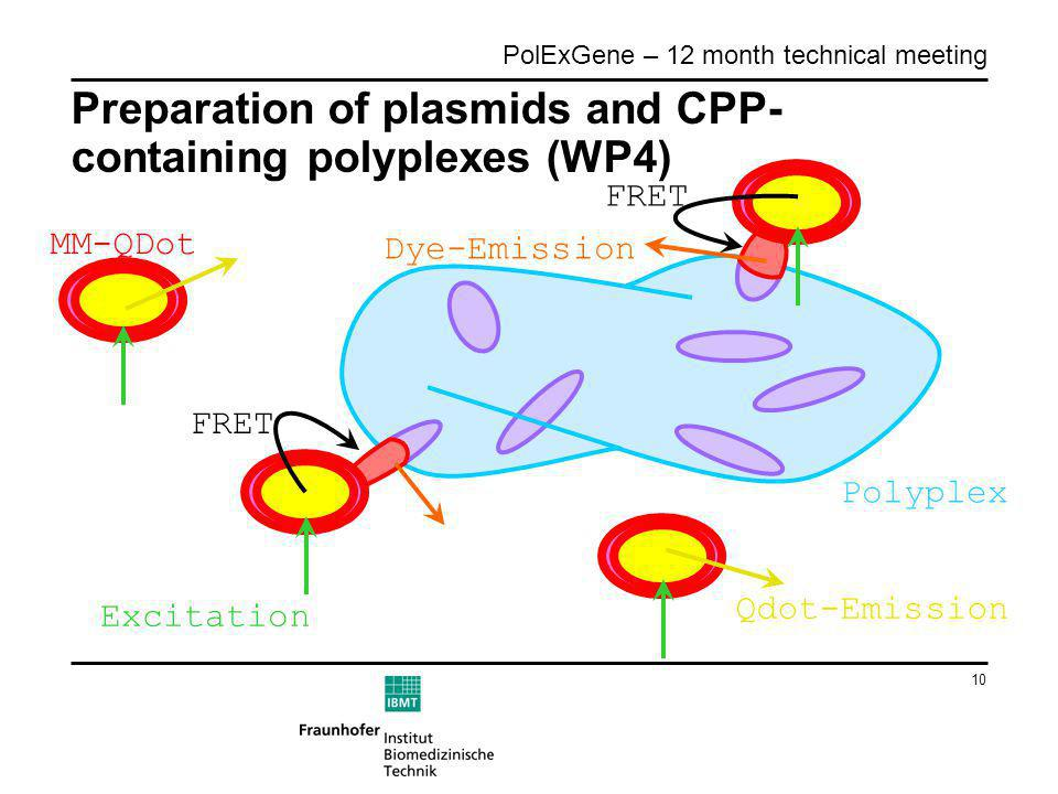10 PolExGene – 12 month technical meeting Preparation of plasmids and CPP- containing polyplexes (WP4) Polyplex FRET Excitation MM-QDot Qdot-Emission Dye-Emission