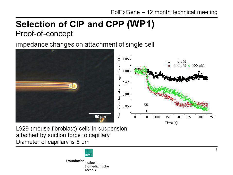 5 PolExGene – 12 month technical meeting Selection of CIP and CPP (WP1) Proof-of-concept impedance changes on attachment of single cell 50 µm L929 (mouse fibroblast) cells in suspension attached by suction force to capillary Diameter of capillary is 8 µm 0 µM 250 µM500 µM