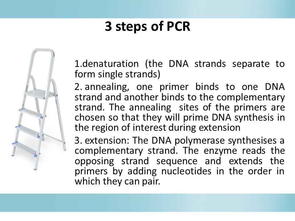 3 steps of PCR 1.denaturation (the DNA strands separate to form single strands) 2.