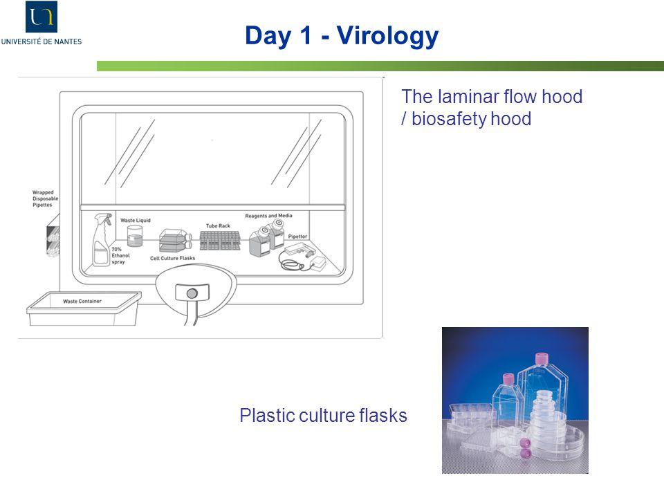 Day 1 - Virology The laminar flow hood / biosafety hood Plastic culture flasks