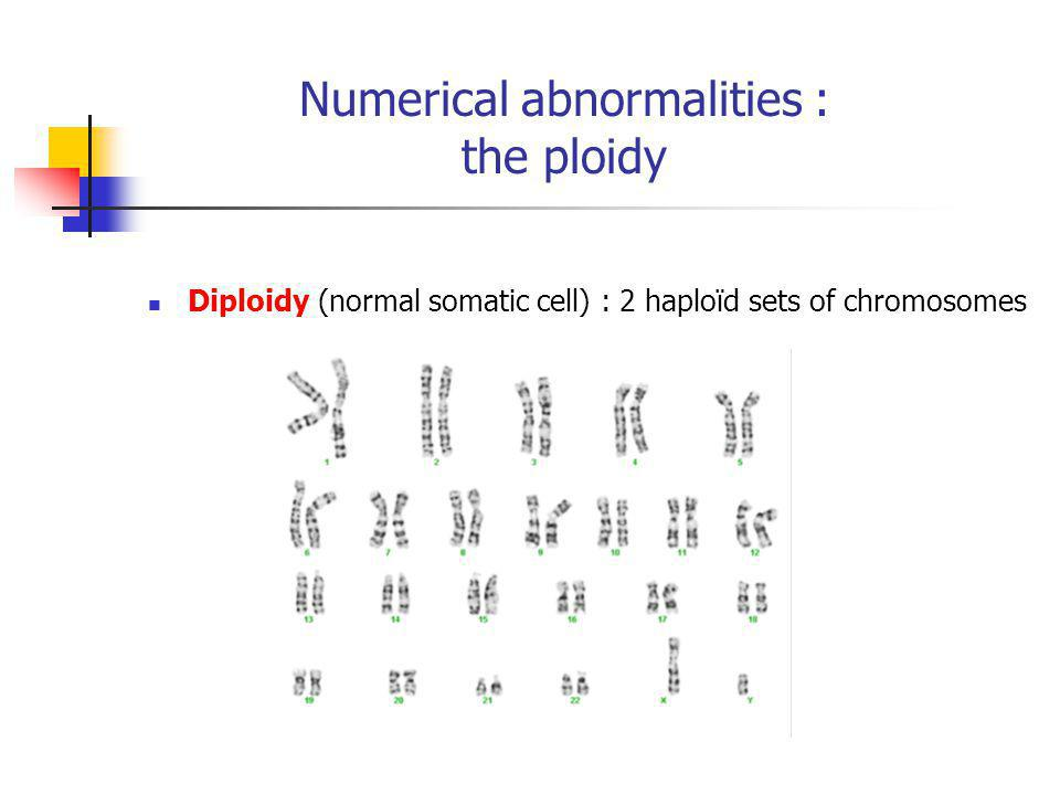 Numerical abnormalities : the ploidy Diploidy (normal somatic cell) : 2 haploïd sets of chromosomes