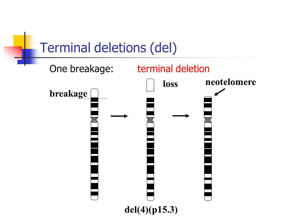 breakage loss neotelomere del(4)(p15.3) Terminal deletions (del) One breakage:terminal deletion