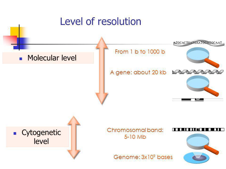 Level of resolution Chromosomal band: 5-10 Mb Genome: 3x10 9 bases ATGCACTGATGAATGCATGCAAT A gene: about 20 kb From 1 b to 1000 b Molecular level Cyto