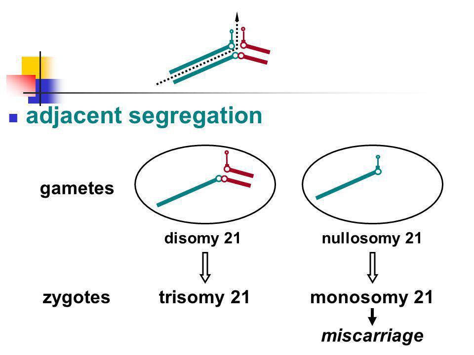 adjacent segregation trisomy 21 disomy 21 gametes zygotesmonosomy 21 nullosomy 21 miscarriage