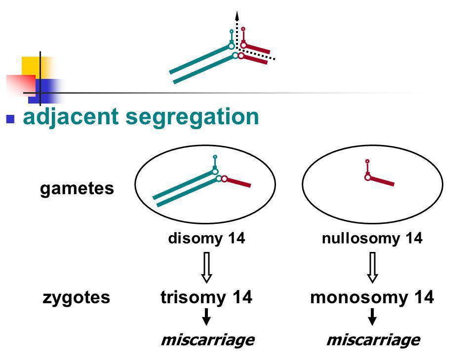 adjacent segregation monosomy 14 nullosomy 14 miscarriage trisomy 14 disomy 14 gametes zygotes miscarriage