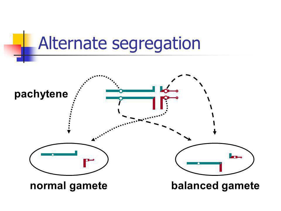 normal gamete balanced gamete pachytene Alternate segregation