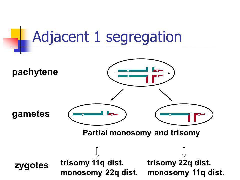 pachytene gametes zygotes Partial monosomy and trisomy trisomy 11q dist. monosomy 22q dist. trisomy 22q dist. monosomy 11q dist. Adjacent 1 segregatio