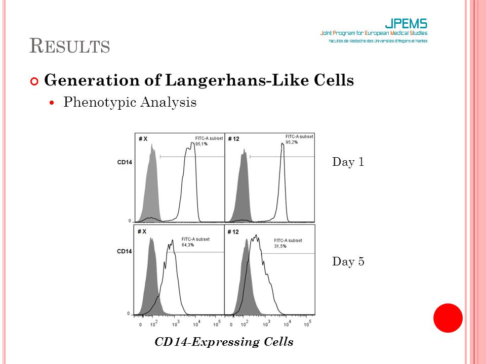 R ESULTS Generation of Langerhans-Like Cells Phenotypic Analysis Improvement of the langerin expression Langerin-Expressing Cells at day 5 and day 8 of incubation (in the LC medium)