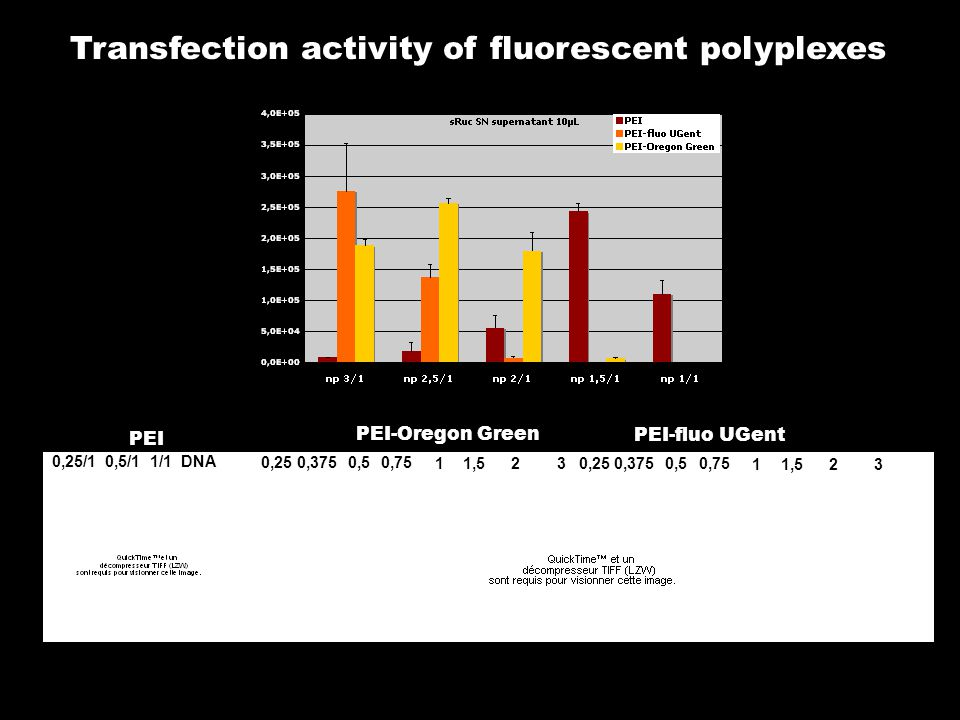 Transfection activity of fluorescent polyplexes 0,250,3750,50,75 11,5230,250,3750,50,75 11,523 PEI-Oregon Green PEI-fluo UGent PEI 0,25/1 0,5/1 1/1 DNA