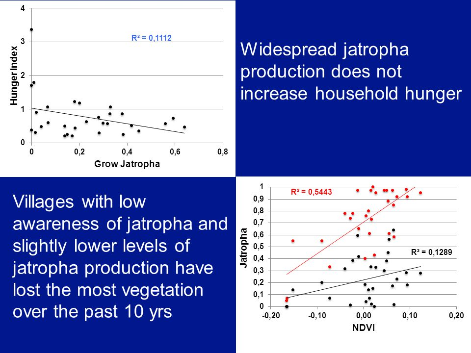 Widespread jatropha production does not increase household hunger Villages with low awareness of jatropha and slightly lower levels of jatropha production have lost the most vegetation over the past 10 yrs