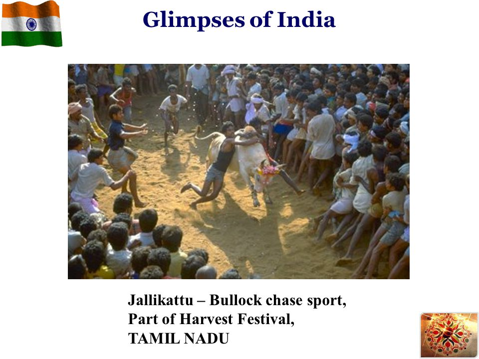 Jallikattu – Bullock chase sport, Part of Harvest Festival, TAMIL NADU Glimpses of India
