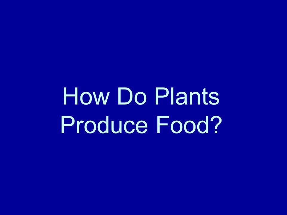How Do Plants Produce Food?