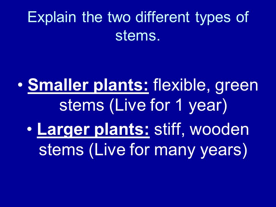 Explain the two different types of stems.