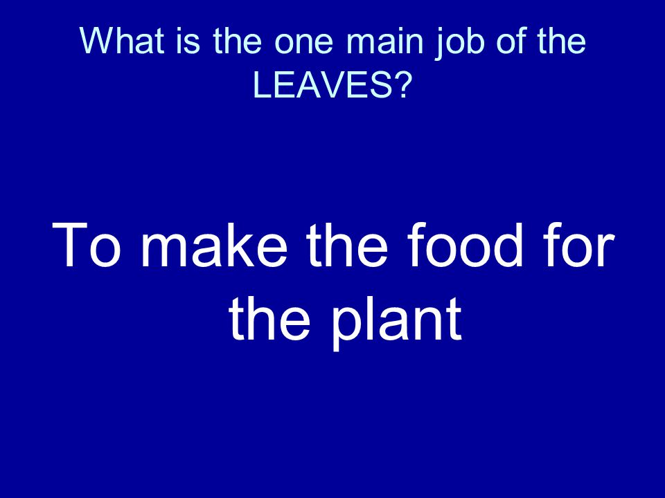 What is the one main job of the LEAVES? To make the food for the plant