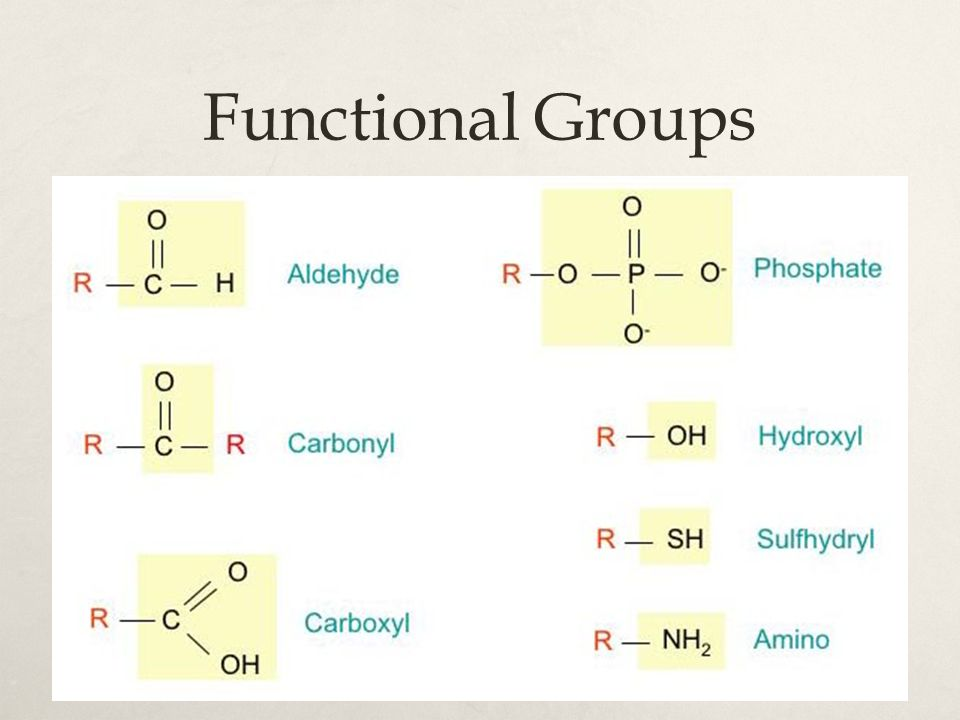 Fats & Oils  Fat = dehydration synthesis of:  Glycerol C 3 H 5 (OH) 3  Fatty acid: 16 or 18 carbon hydrocarbon chain w/ carboxyl group  Glycerol + 3 fatty acid chains = triglyceride + 3 H 2 O  Function:  Energy storage  Insulation  Protective cushioning around organs