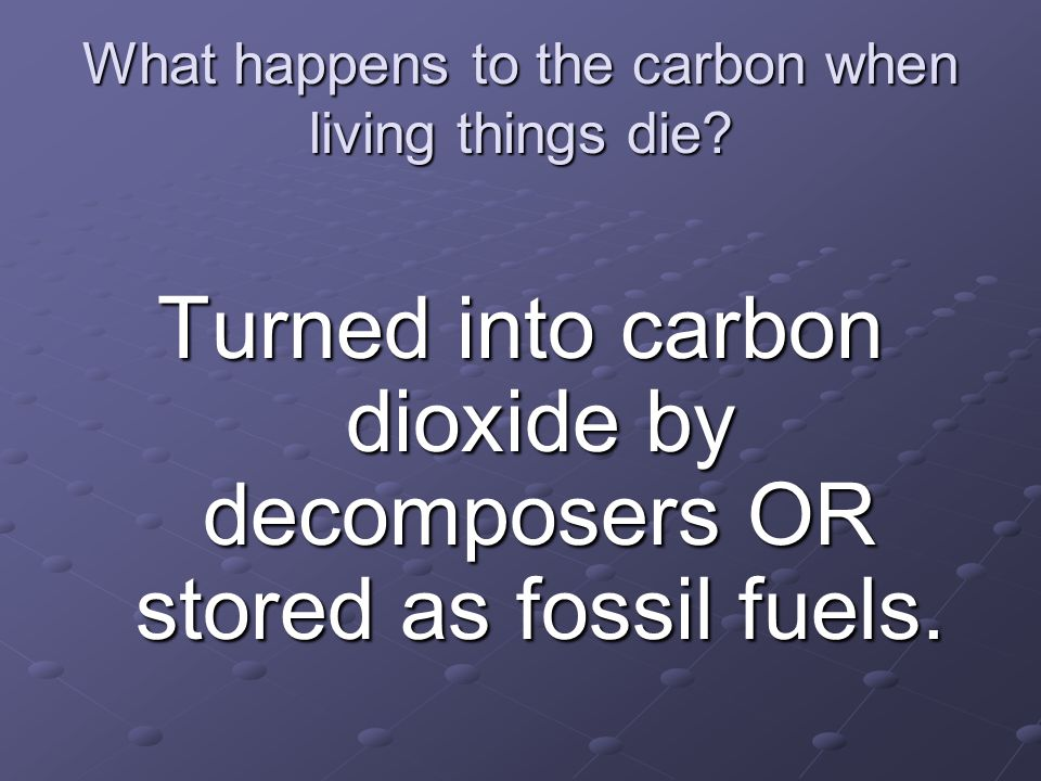 What happens to the carbon when living things die? Turned into carbon dioxide by decomposers OR stored as fossil fuels.