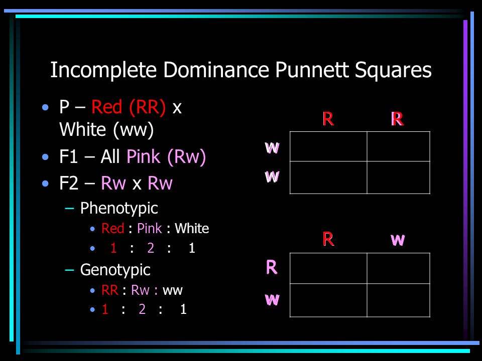 w RR w w ww w R RRRR Incomplete Dominance Punnett Squares P – Red (RR) x White (ww) F1 – All Pink (Rw) F2 – Rw x Rw –Phenotypic Red : Pink : White 1 :