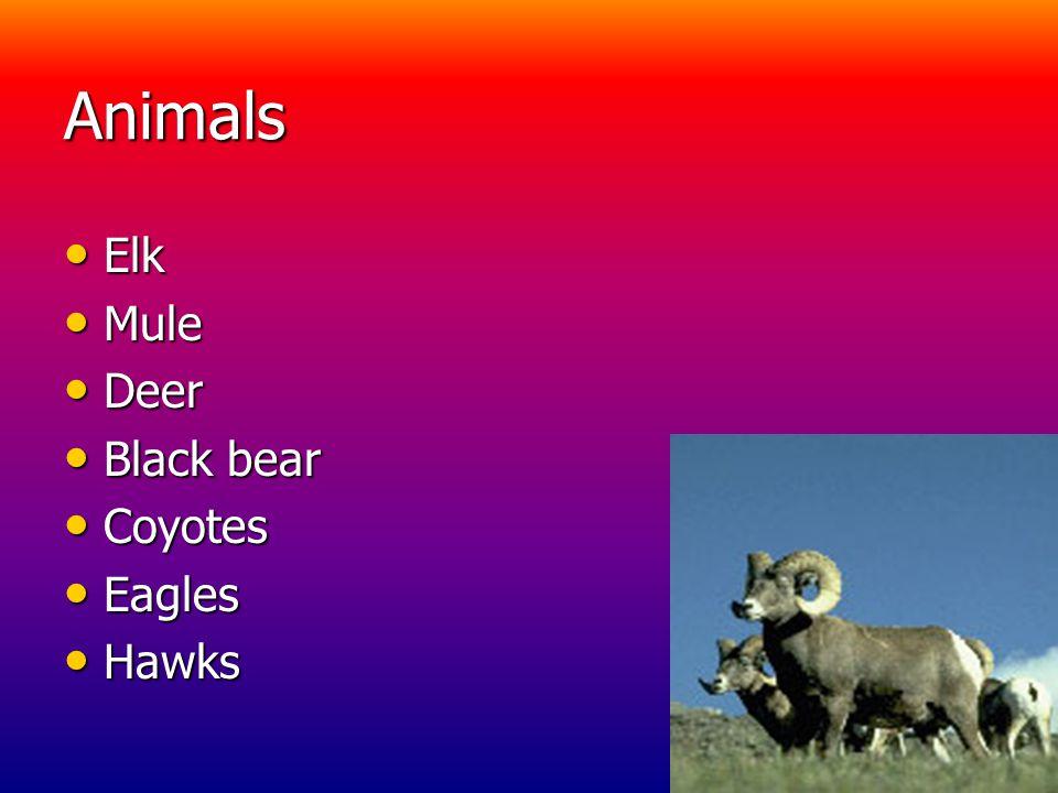Animals Elk Elk Mule Mule Deer Deer Black bear Black bear Coyotes Coyotes Eagles Eagles Hawks Hawks