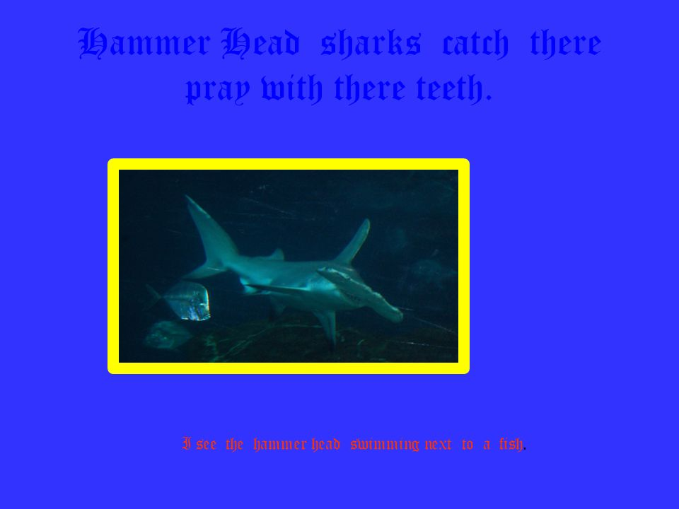 Hammer Head sharks catch there pray with there teeth.