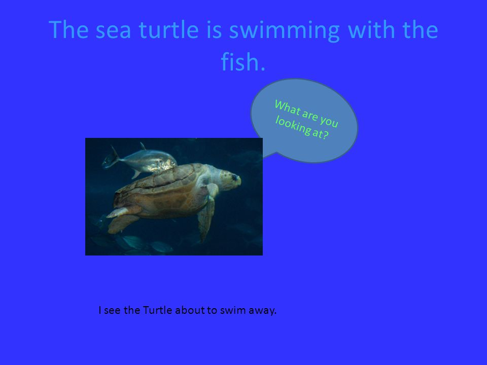The sea turtle is swimming with the fish. What are you looking at.