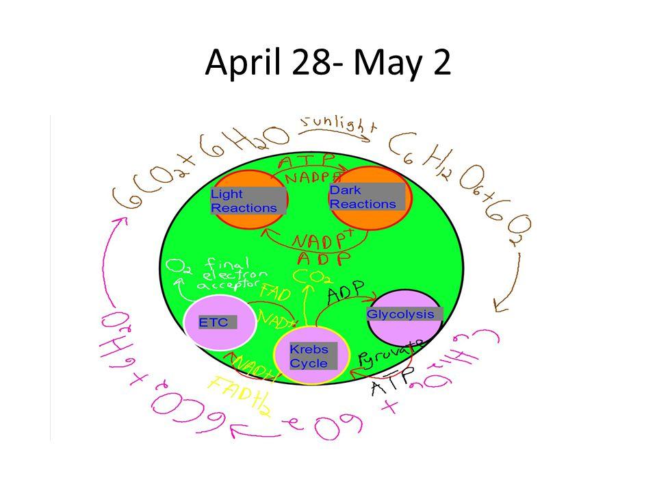 April 28- May 2