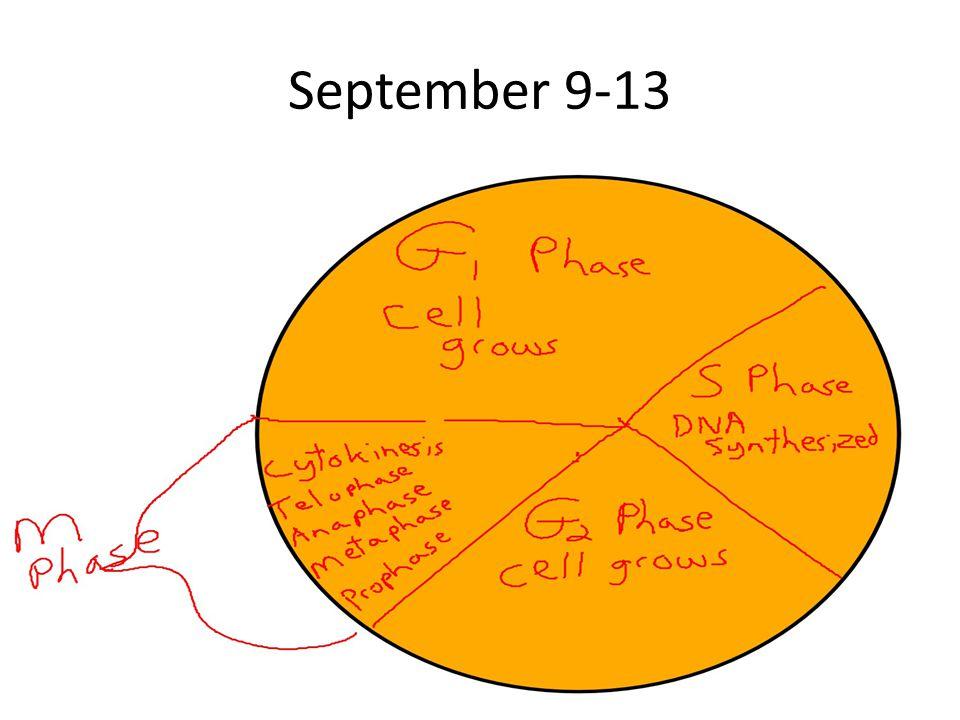 September 9-13