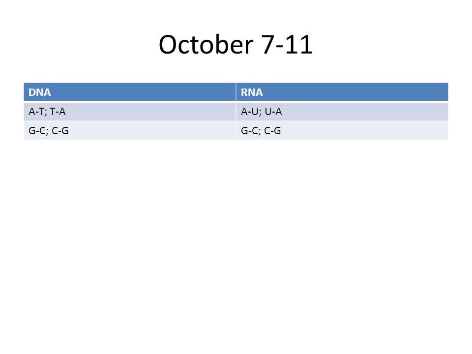 October 7-11 DNARNA A-T; T-AA-U; U-A G-C; C-G