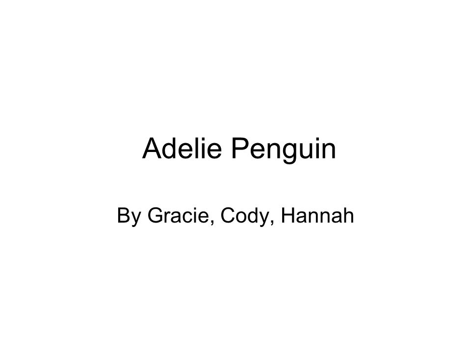 Adelie Penguin By Gracie, Cody, Hannah