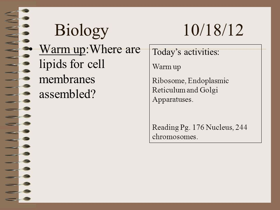 Biology 10/18/12 Warm up:Where are lipids for cell membranes assembled.