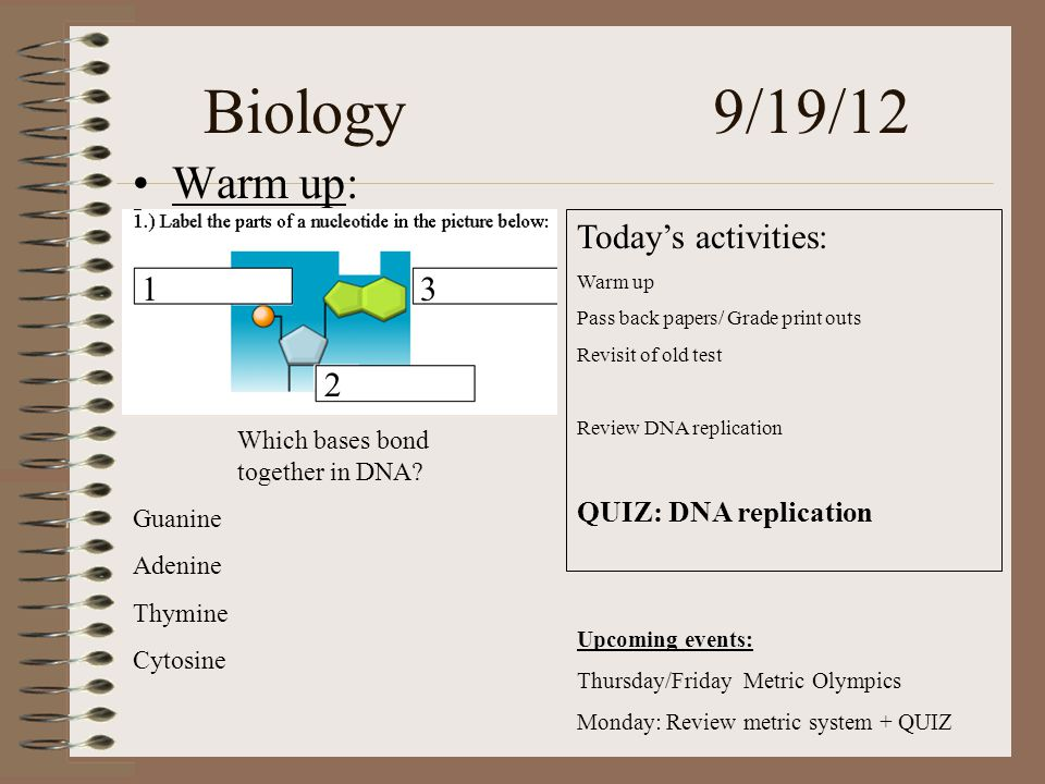 Biology 9/19/12 Warm up: Today's activities: Warm up Pass back papers/ Grade print outs Revisit of old test Review DNA replication QUIZ: DNA replication 13 2 Which bases bond together in DNA.