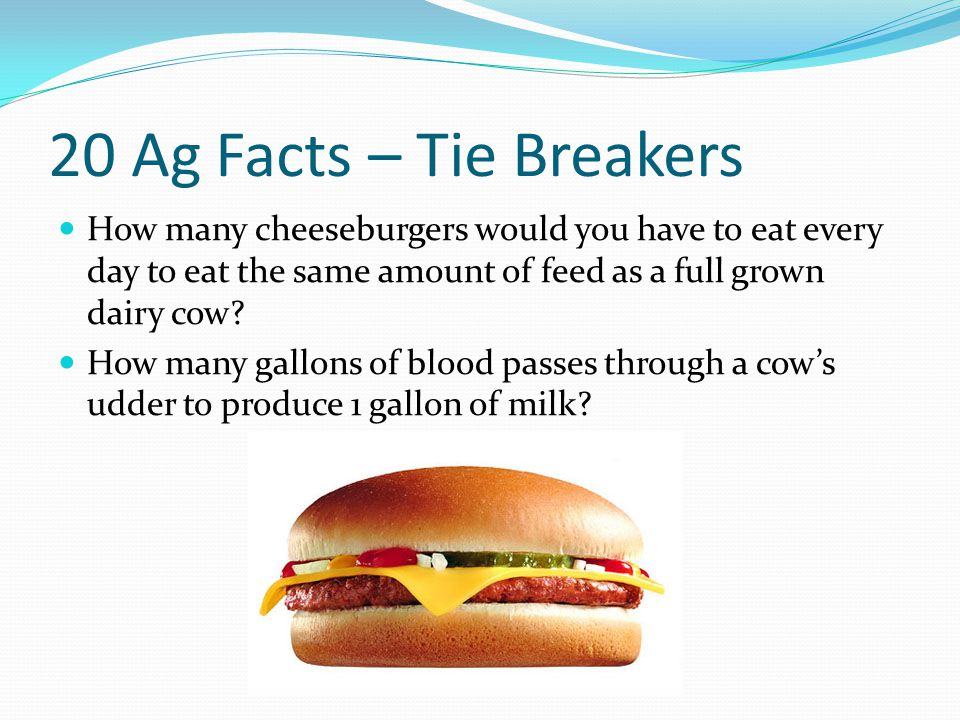 20 Ag Facts – Tie Breakers How many cheeseburgers would you have to eat every day to eat the same amount of feed as a full grown dairy cow.