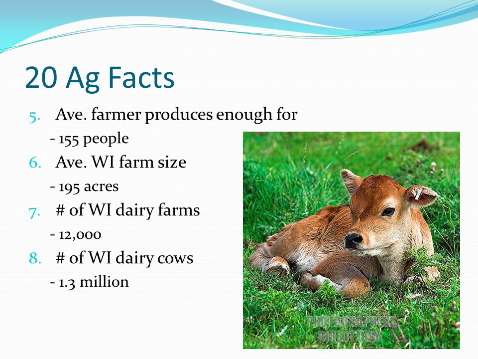 20 Ag Facts 5. Ave. farmer produces enough for - 155 people 6. Ave. WI farm size - 195 acres 7. # of WI dairy farms - 12,000 8. # of WI dairy cows - 1