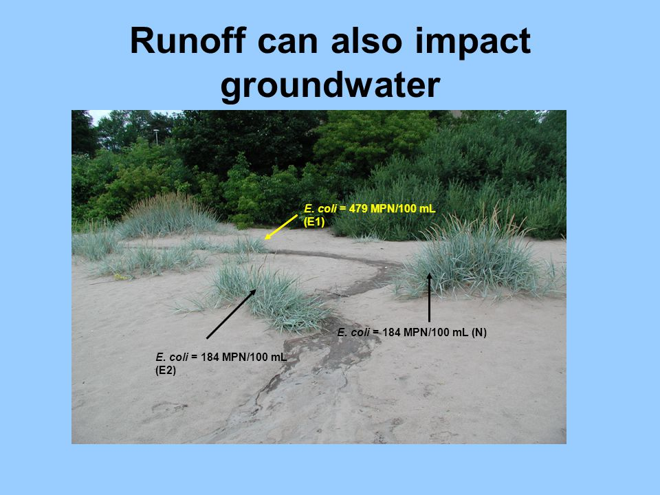 Runoff can also impact groundwater E. coli = 479 MPN/100 mL (E1) E. coli = 184 MPN/100 mL (E2) E. coli = 184 MPN/100 mL (N)