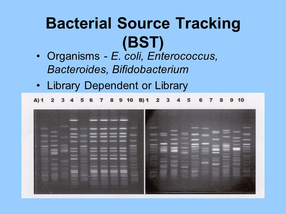 Bacterial Source Tracking (BST) Organisms - E.