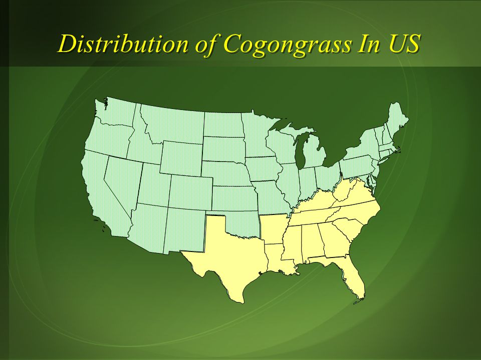 Distribution of Cogongrass In US