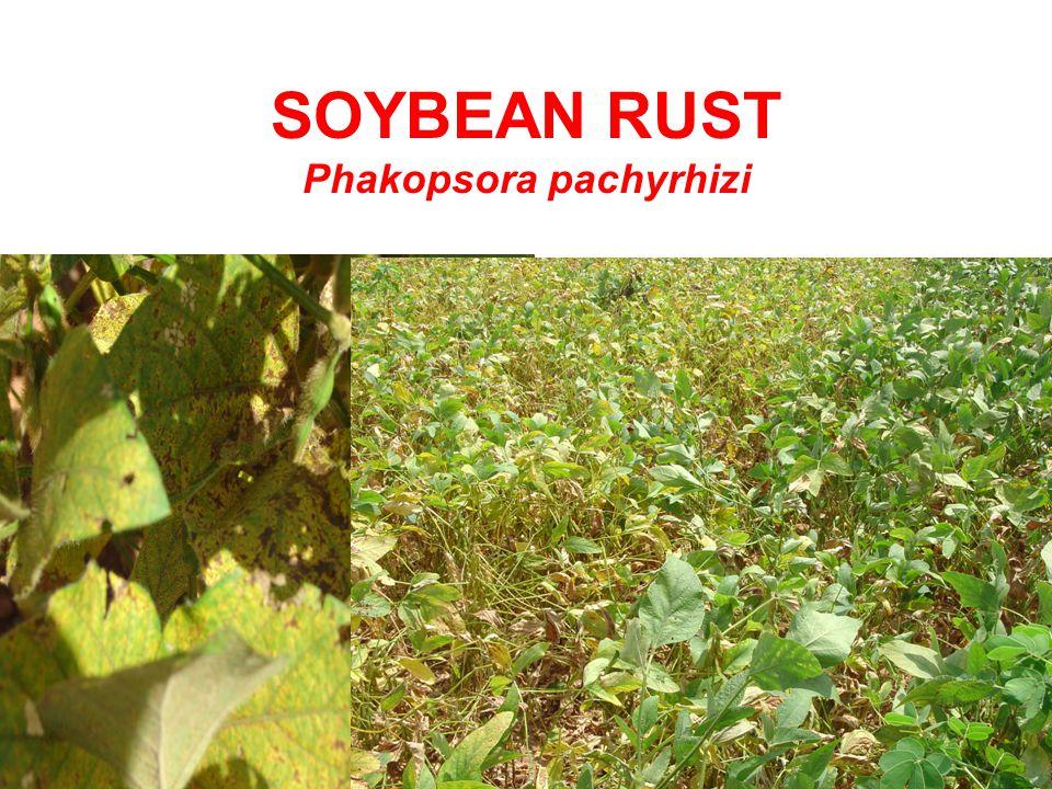 SOYBEAN RUST Phakopsora pachyrhizi